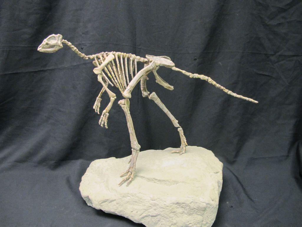 Where can I see Dinosaurs: Dinosaur Skeleton