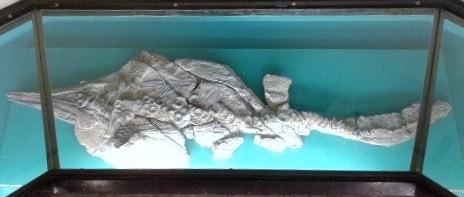Charles Darwin: Mary Anning's Icthyosaur