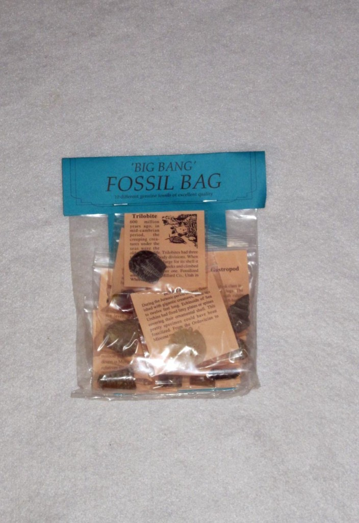 fossil party bag