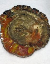 large fossil wood slice
