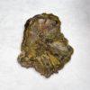 Rhexolylan Seed Fern
