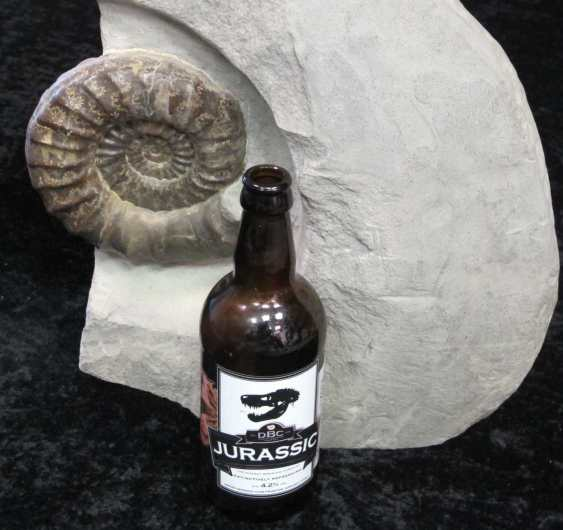 ammonite and beer