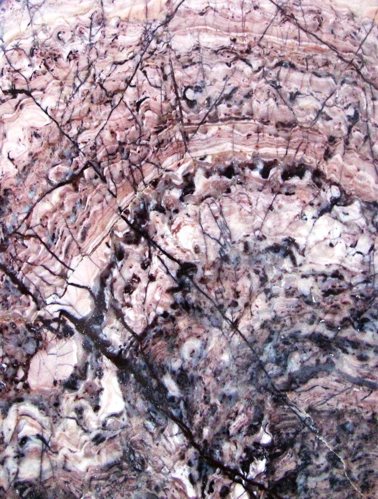 Stromatolites Crytozoon Colony