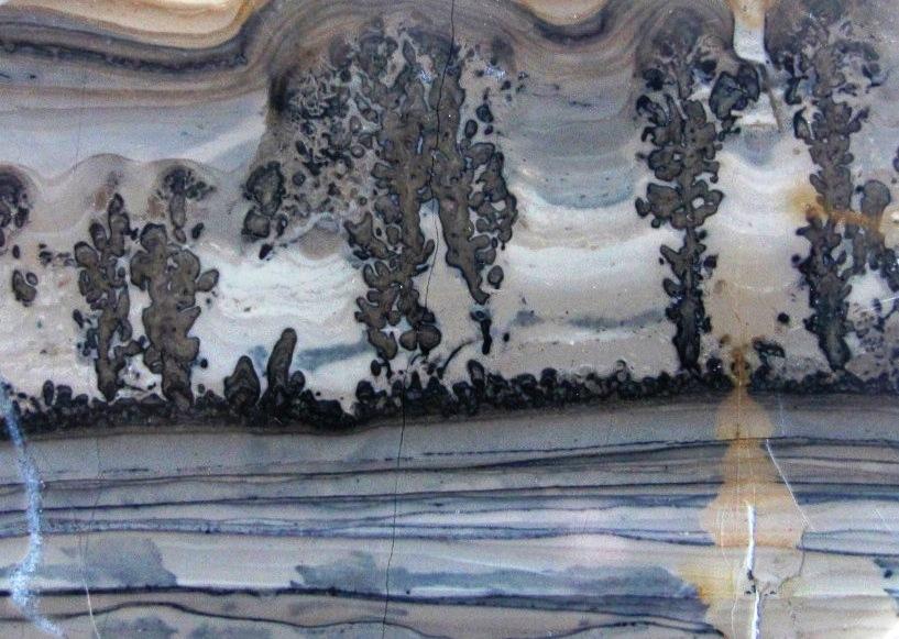 stromatolites Cotham Marble