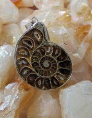 Cleoniceras Ammonite Pendant