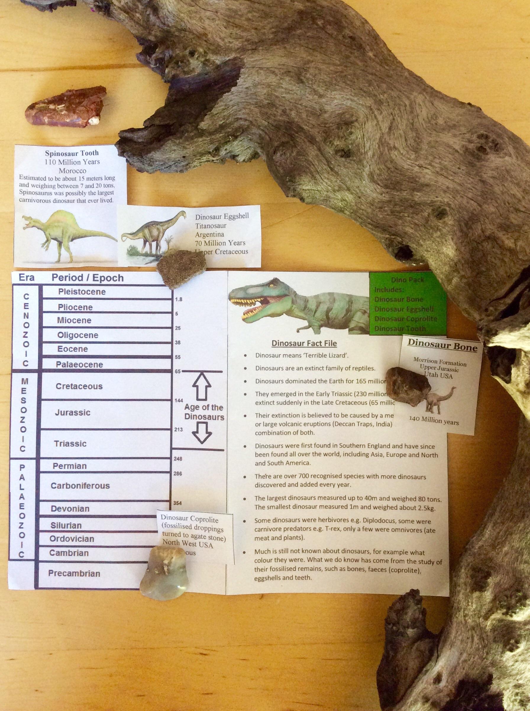 Dinosaur Tooth & Dinosaur Fossils
