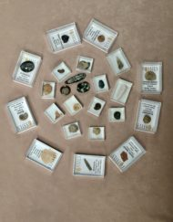 Fossil Collection for Children