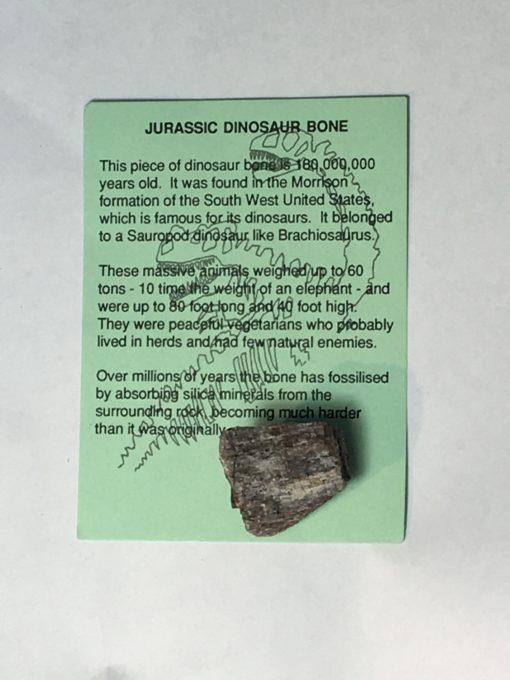 Jurassic Dinosaur Bone