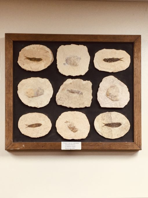 3D Picture fish fossils