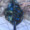Labradorite Leaf