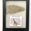 Sauropod Dinosaur Bone Specimen