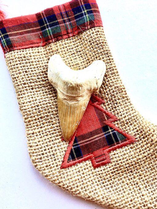Fossilised Shark Tooth Stocking Stuffer