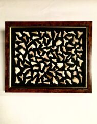 Framed Shark Teeth