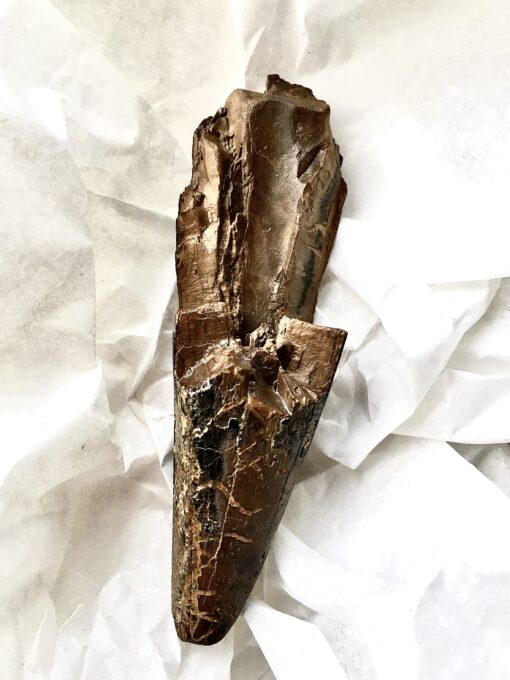 T Rex Tooth