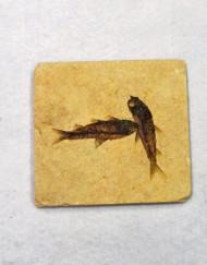 Fossilised Fish Plate x2