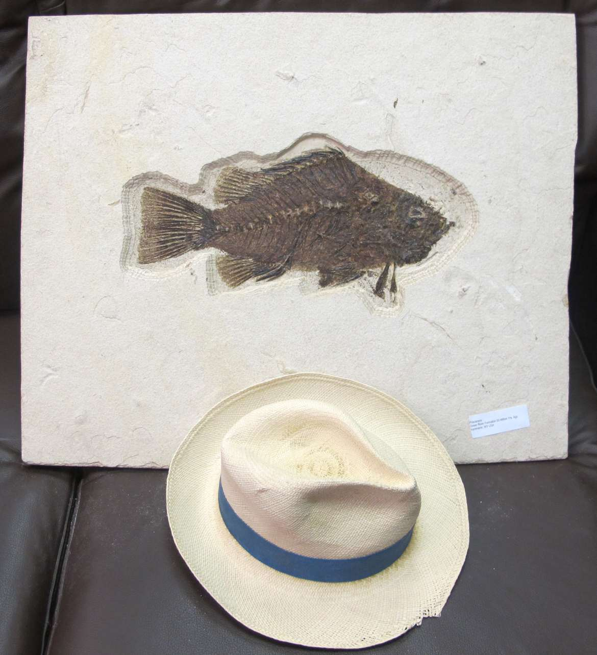 fossils fish and hat