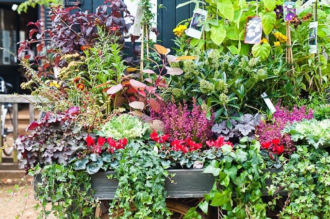Garden Ideas: photo credit: mylifelovefood.com