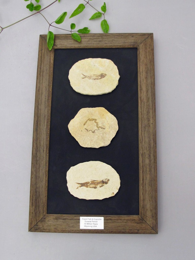 3 D picture fish fossils